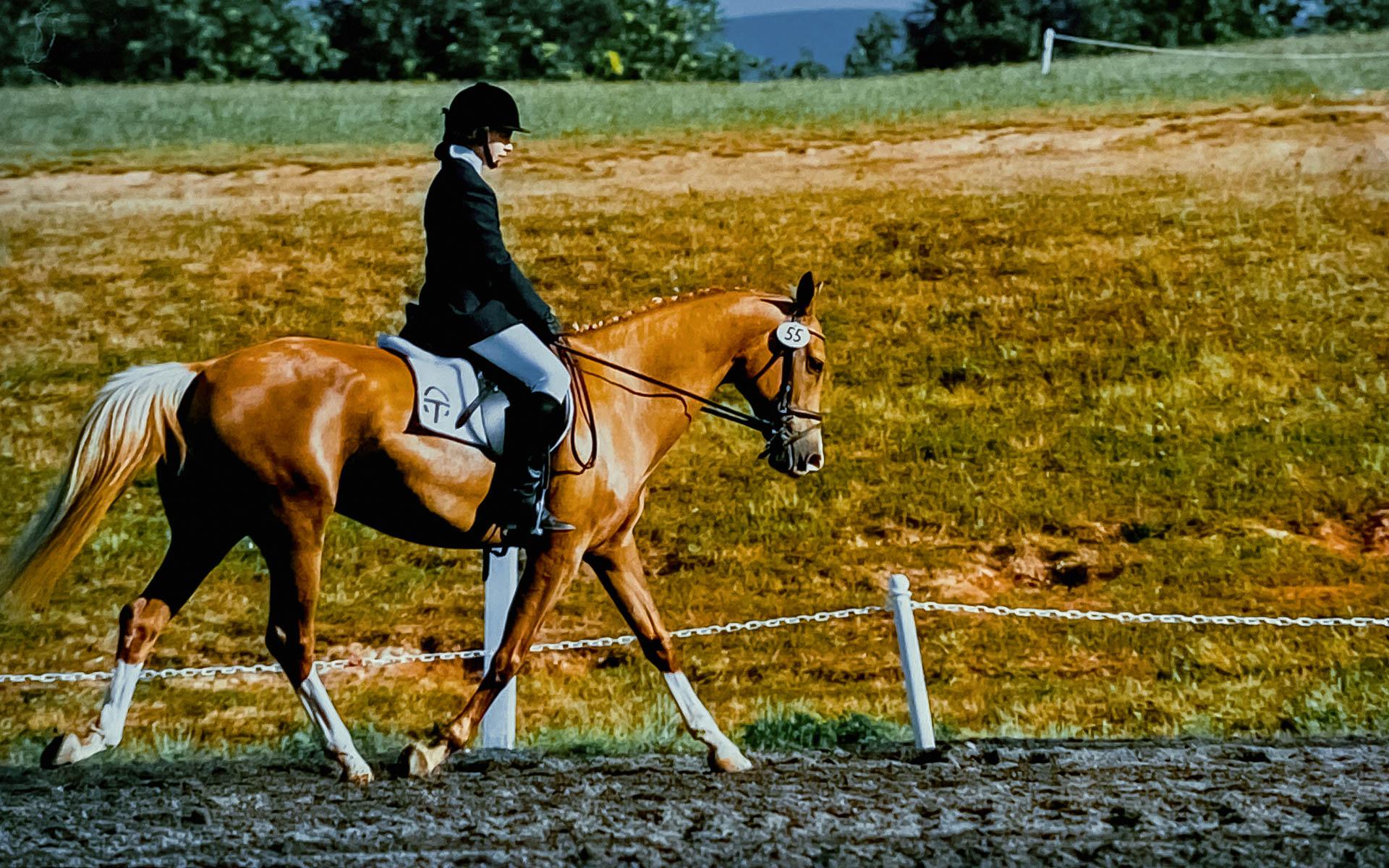 Dana Johnson riding her Akhal-Teke